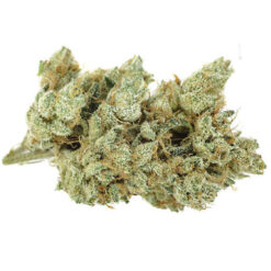AK-47 strain for sale online
