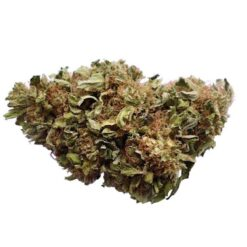 Buy Blue Cheese strain online