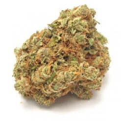 buy Dutch Treat strain online
