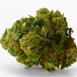 buy Mazar x Blueberry strain