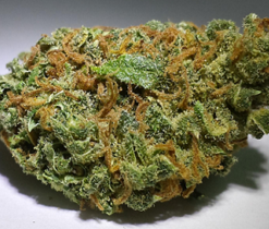 buy Romulan kush for sale online