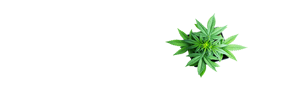 Bud House Dispensary